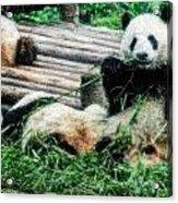 3722-panda -  Embossed Sl Acrylic Print