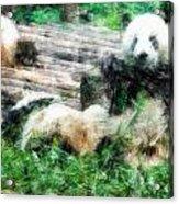 3722-panda -  Light Colored Pencils Acrylic Print