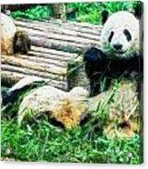 3722-panda -  Oil Stain Sl Acrylic Print