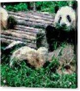 3722-panda -  Pastel Chalk 1 Acrylic Print
