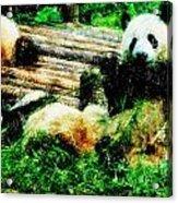 3722-panda -  Pastel Pencils Acrylic Print