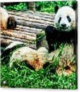 3722-panda -  Watercolor 1 Acrylic Print