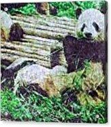 3722-panda -  Watercolor 2 Sl Acrylic Print