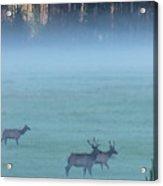 Usa, Colorado, Rocky Mountain National Acrylic Print