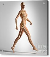 3d Rendering Of A Naked Woman Walking Acrylic Print