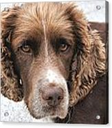 Alfi Our Dog Acrylic Print