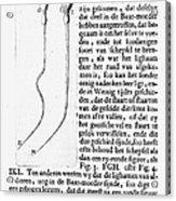 Anton Van Leeuwenhoek Acrylic Print