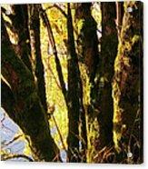 Autumn 3 Acrylic Print