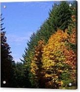 Autumn 9 Acrylic Print
