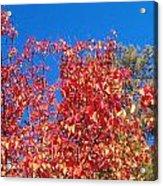 Autumn Color Acrylic Print