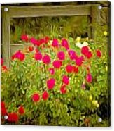 Fence Line Flowers Acrylic Print