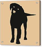 Black Labrador Acrylic Print