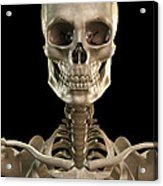 Bones Of The Head And Upper Thorax Acrylic Print