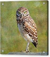 A Burrowing Owl Acrylic Print