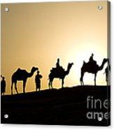 Camel Caravan, India Acrylic Print