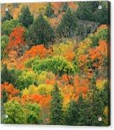 Canada, Ontario, Algonquin Provincial Acrylic Print