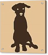 Chocolate Labrador Acrylic Print