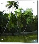 Coconut Trees And Other Plants In A Creek Acrylic Print