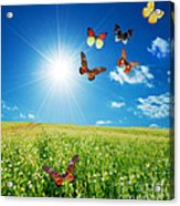 Colorful Buttefly Spring Field Acrylic Print