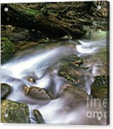 Cranberry Wilderness Acrylic Print by Thomas R Fletcher