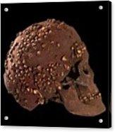 Cro-magnon Fossil Skull Acrylic Print