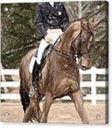 Dressage Horse Portrait Acrylic Print