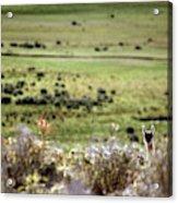 Environmental Tierra Del Fuego -- Acrylic Print