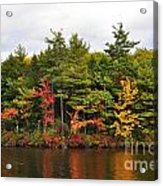 Fall Foliage In New England Acrylic Print