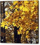 Fall Yellow Acrylic Print