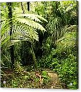 Forest No1 Acrylic Print