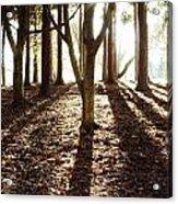 Forest Sunlight Acrylic Print
