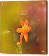 Garden Flower   Acrylic Print