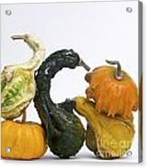 Gourds And Pumpkins Acrylic Print