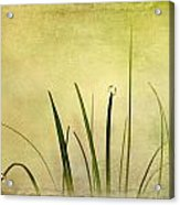 Grass Acrylic Print by Svetlana Sewell