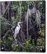Heron Colors Acrylic Print