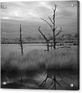 Infrared Picture Of Nature Areas In The Netherlands Dwingelderveld Acrylic Print by Ronald Jansen