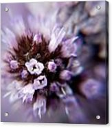 Spring Is Bursting Out All Over. Acrylic Print