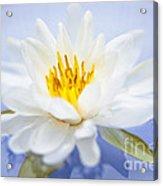 Lotus Flower Acrylic Print