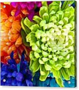 Multicolored Chrysanthemums  Acrylic Print