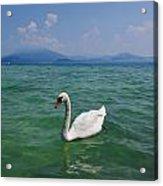 Mute Swan. Sirmione. Lago Di Garda Acrylic Print