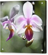 Orchids Dance Acrylic Print