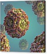 Parvovirus B19 Acrylic Print