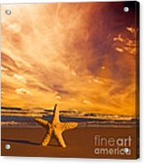 Starfish On The Beach At Sunset Acrylic Print