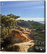 Torrey Pines State Park - California Acrylic Print
