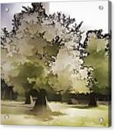 Tree With Large White Flowers Acrylic Print