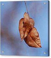 #withinmealunaticsings Acrylic Print