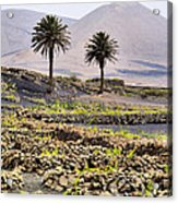Vineyard On Lanzarote Acrylic Print