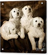 Vintage Festive Puppies Acrylic Print by Angel  Tarantella