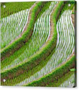 Water-filled Rice Terraces, Bali Acrylic Print