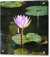 Pond Of Water Lily Acrylic Print
